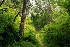 Talahi Woods